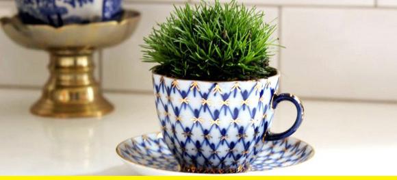 A teacup plant holder